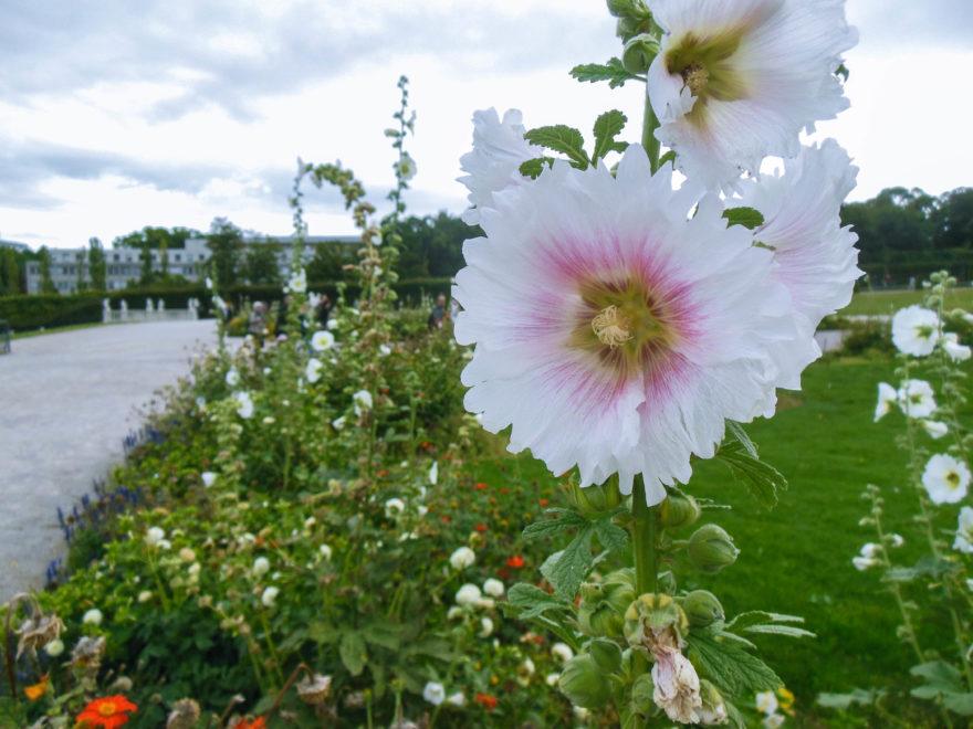 Austria 2016 - Schloss Belvedere garden flowers