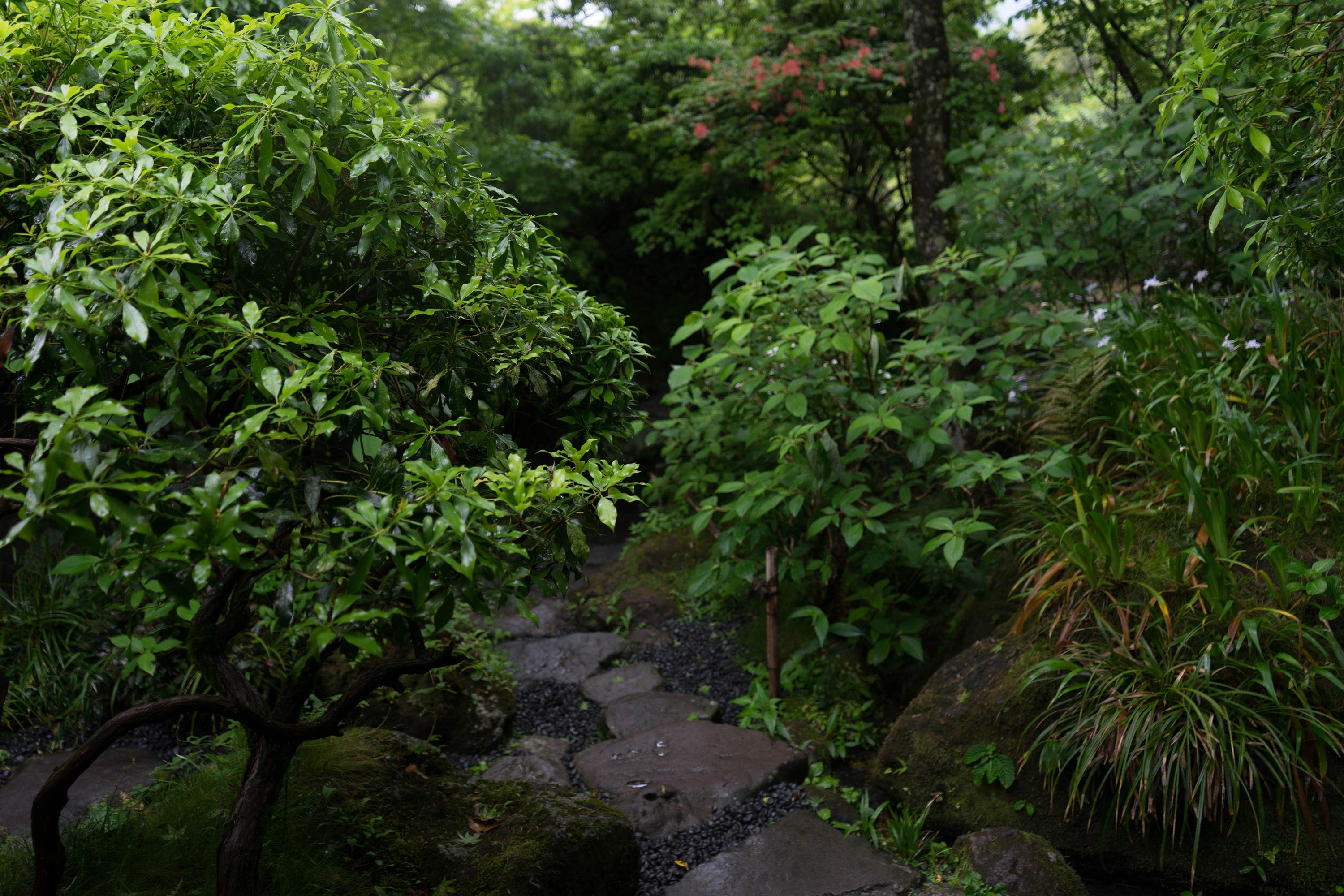 Back in Japan – Hakone