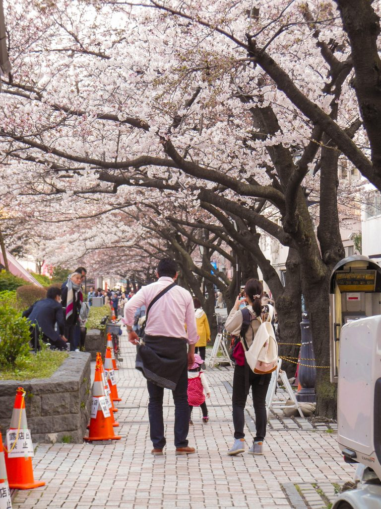 Japan Trip 2015 - Sakura / Cherry Blossoms in Sumida Park, Asakura