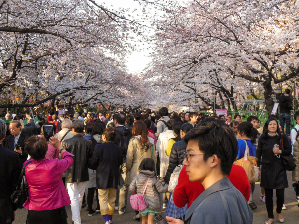 Japan Trip 2015 - Sakura / Cherry Blossoms in Ueno Park