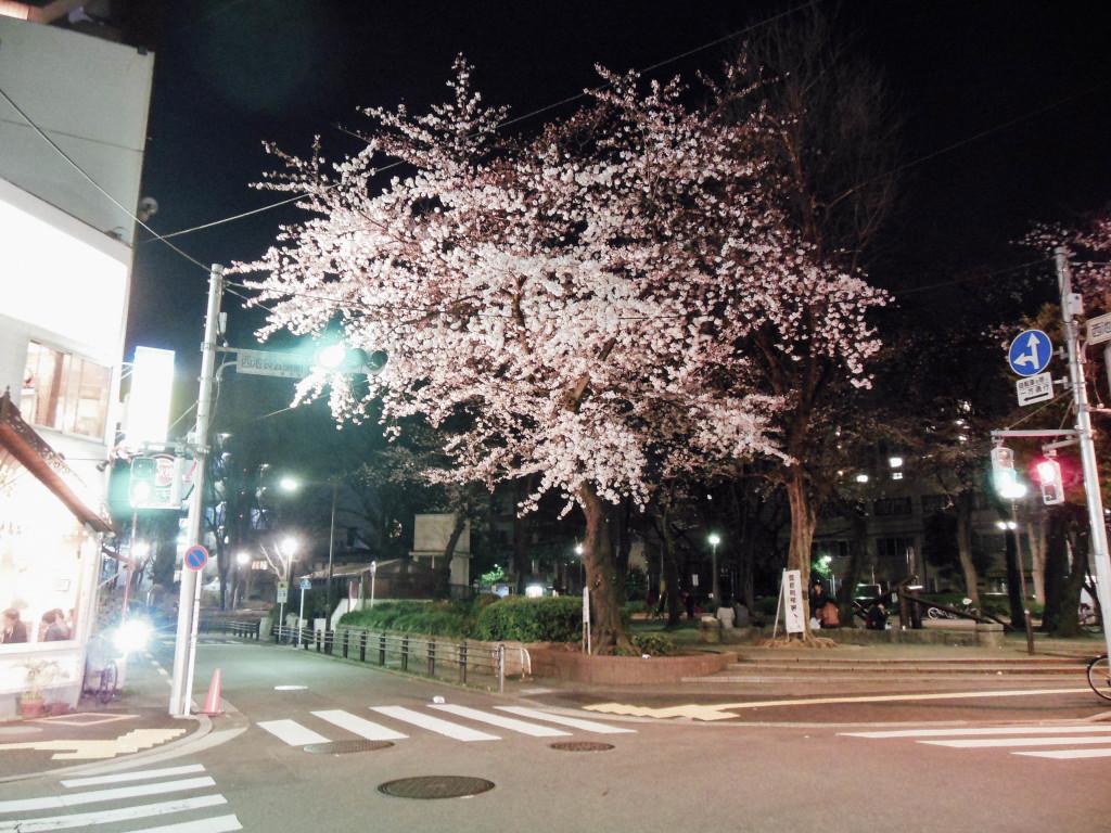 Japan Trip 2015 - Sakura / Cherry Blossoms in Ikebukuro